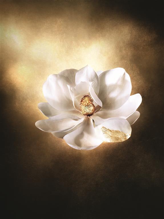 dec_corpo_visual_magnolia_rvb_-_copy_medium