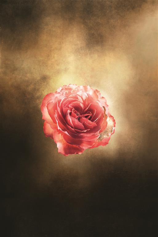 dec_corpo_visual_rose_rvb_-_copy_medium